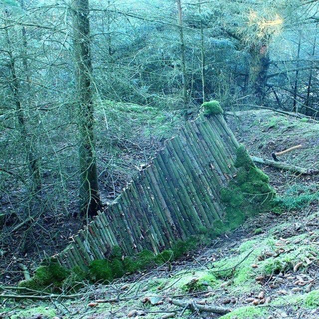 двухскатный домик в лесу